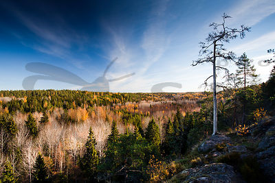Autumn in Nuuksio National Park