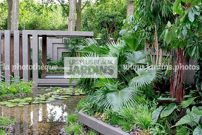 Contemporary garden, Exotic garden, Palm tree, Pool, Tropical garden, Water garden,