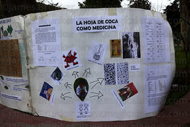 Poster describing medicinal benefits of coca leaves ( Erythroxylum coca ) , La Paz , Bolivia