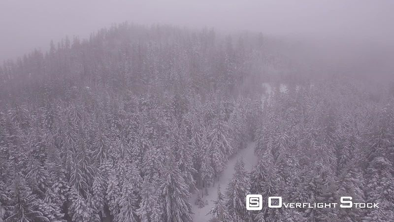 Snow covered trees hidden in fog Oregon