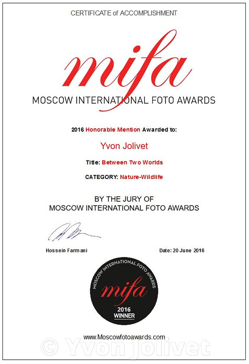 MIFA (Moscow International Foto Awards) 2016 Photographs, Awards