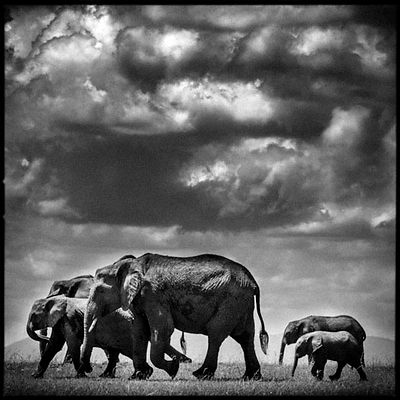 8411-Elephant_Under_the_clouds_II_Kenya_2006_Laurent_Baheux