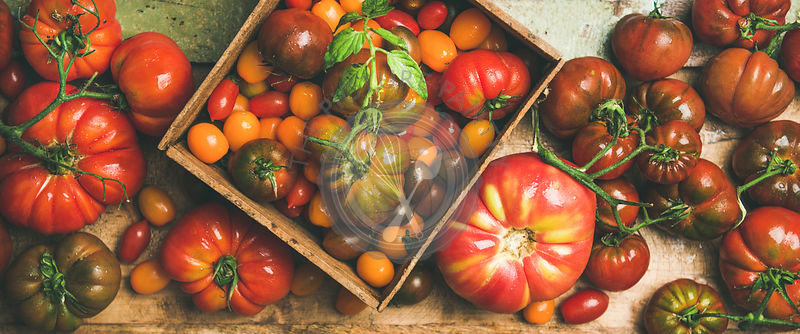 Flat -lay of fresh colorful tomatoes variety