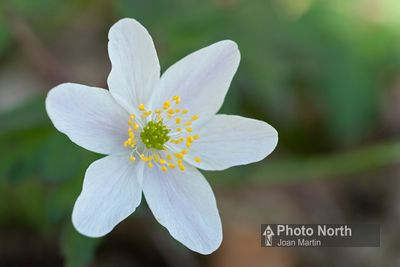 Limestone Flowers Gallery photos
