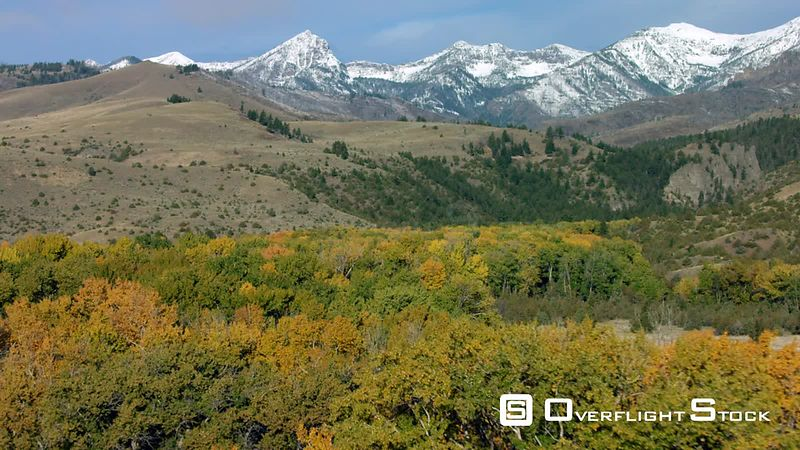 The bright gold color of Aspen trees in autumn dots the foothils of the Gallatin mountain range near Paradise Valley, Montana.