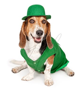 Basset Hound Dog Wearing St Patricks Day Outfit