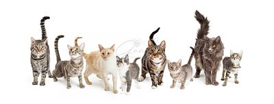 Row of Cats and Kittens Horizontal Web Banner