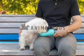 man giving water to white dog
