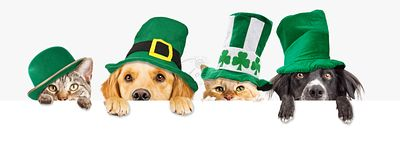 St Patricks Day Dogs and Cats Over Web Banner