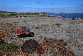 Seaweed harvestor's wheelbarrow , Llanos de Challe National Park , Region III , Chile