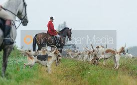 Andrew Osborne MFH and hounds - The Cottesmore Hunt at Tongue End 28/8