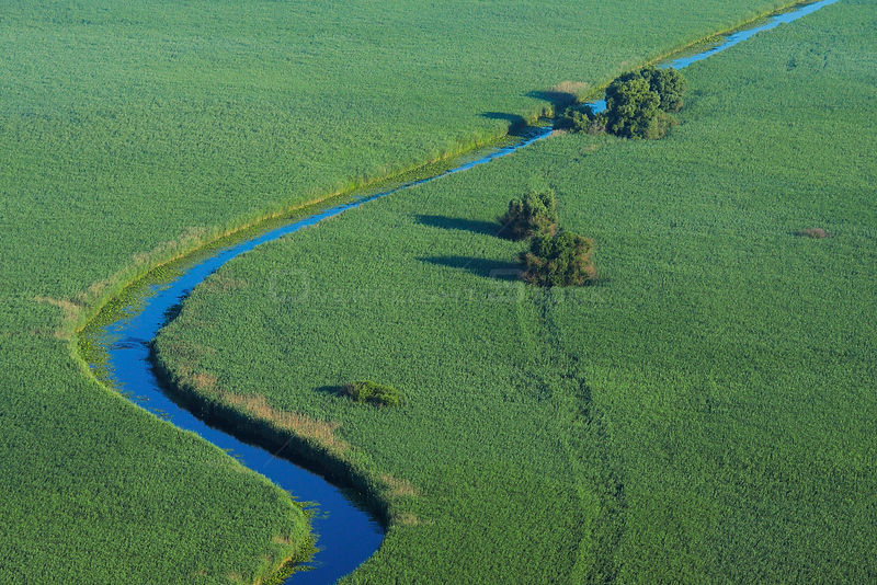 Aerial view of meandering river within the Danube delta rewilding area, Romania, June 2012