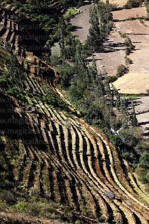 Inca terracing at Muscapuquio in Patacancha Valley near Ollantaytambo, Cusco Region, Peru