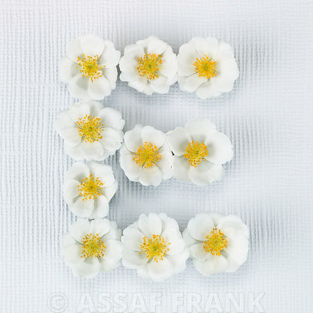 The letter E written in white Roses