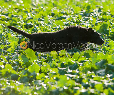 Gun dogs photos