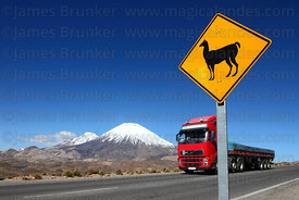 Truck passing llama crossing road sign next to Highway 11, Payachatas volcanos in background , Lauca National Park , Region XV , Chile