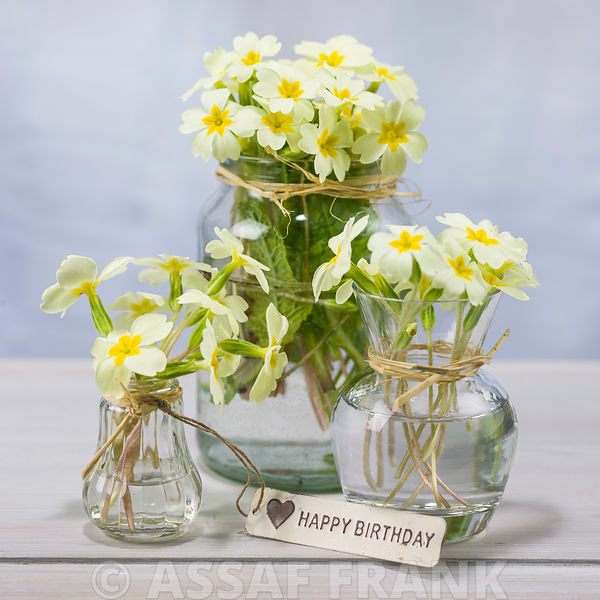 Primrose flowers in a glass bottles with a happy birthday tag