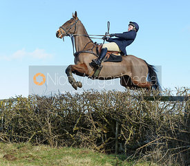 Meghan Healy jumping a hedge near Knossington Spinney - The Cottesmore at Furze Hill.