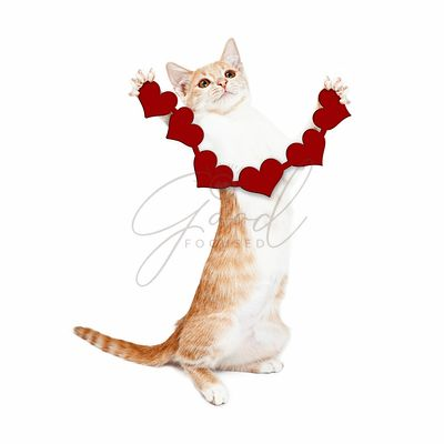 Playful Kitten Holding Heart Cutouts