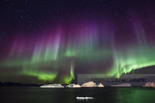 Green and purple Aurora above icebergs in the Uummannaq fjord in Greenland