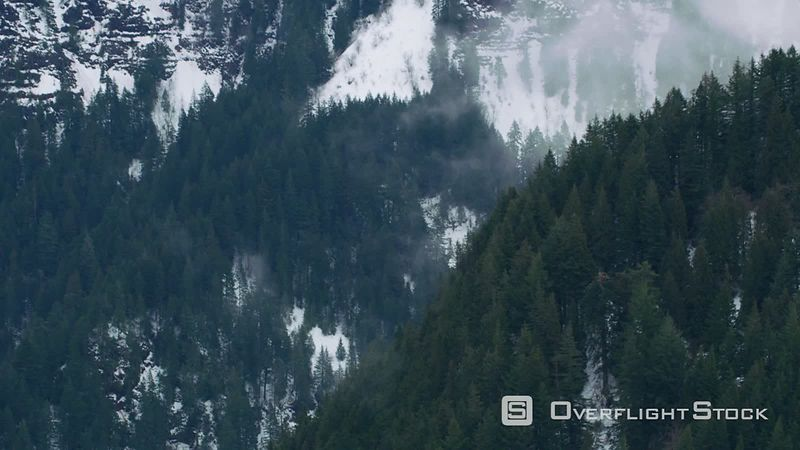 Aerial view of fog and trees in winter, Columbia River Gorge, Oregon