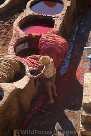 Leather worker cleaning skins at the tannery in the medina, Fes, Morocco; Portrait