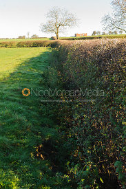 Fence 11 - hedge with open ditch in front
