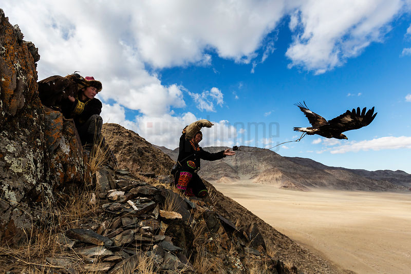 Kazakh Eagle Hunters Launching Eagles at the Golden Eagle Festival