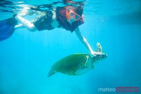Child swimming with sea turtles, Barbados, Caribbean