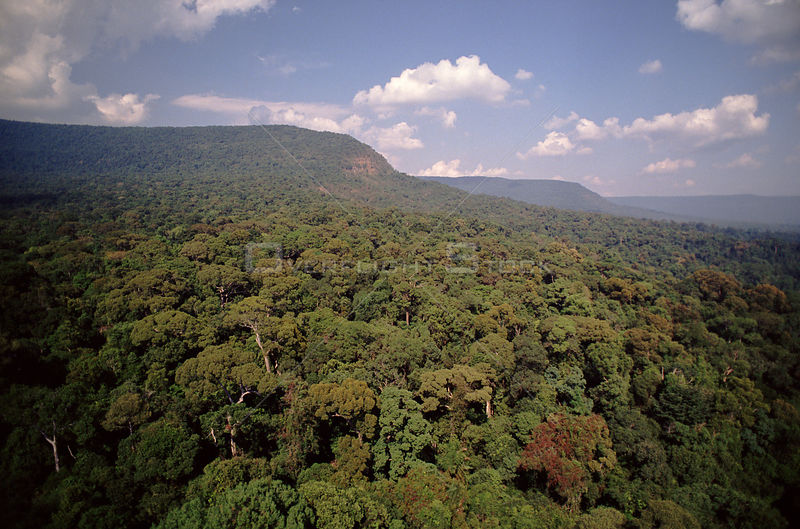 Dry evergreen forest, aerial view. Khao Yai NP, Thailand