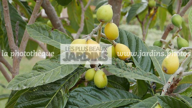 La phototh que les plus beaux jardins arbres fruitiers le plus grand choix de photos de jardin - Baie du japon en 3 lettres ...