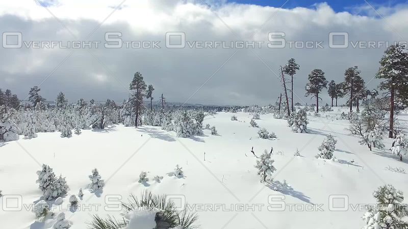 Snowy Pines Arizona