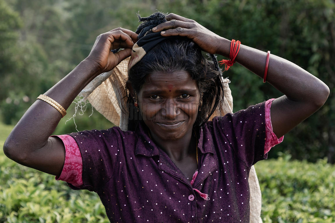 Portrait of a Tea Picker Adjusting her Head Sling