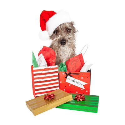 Terrier Santa Dog With Presents