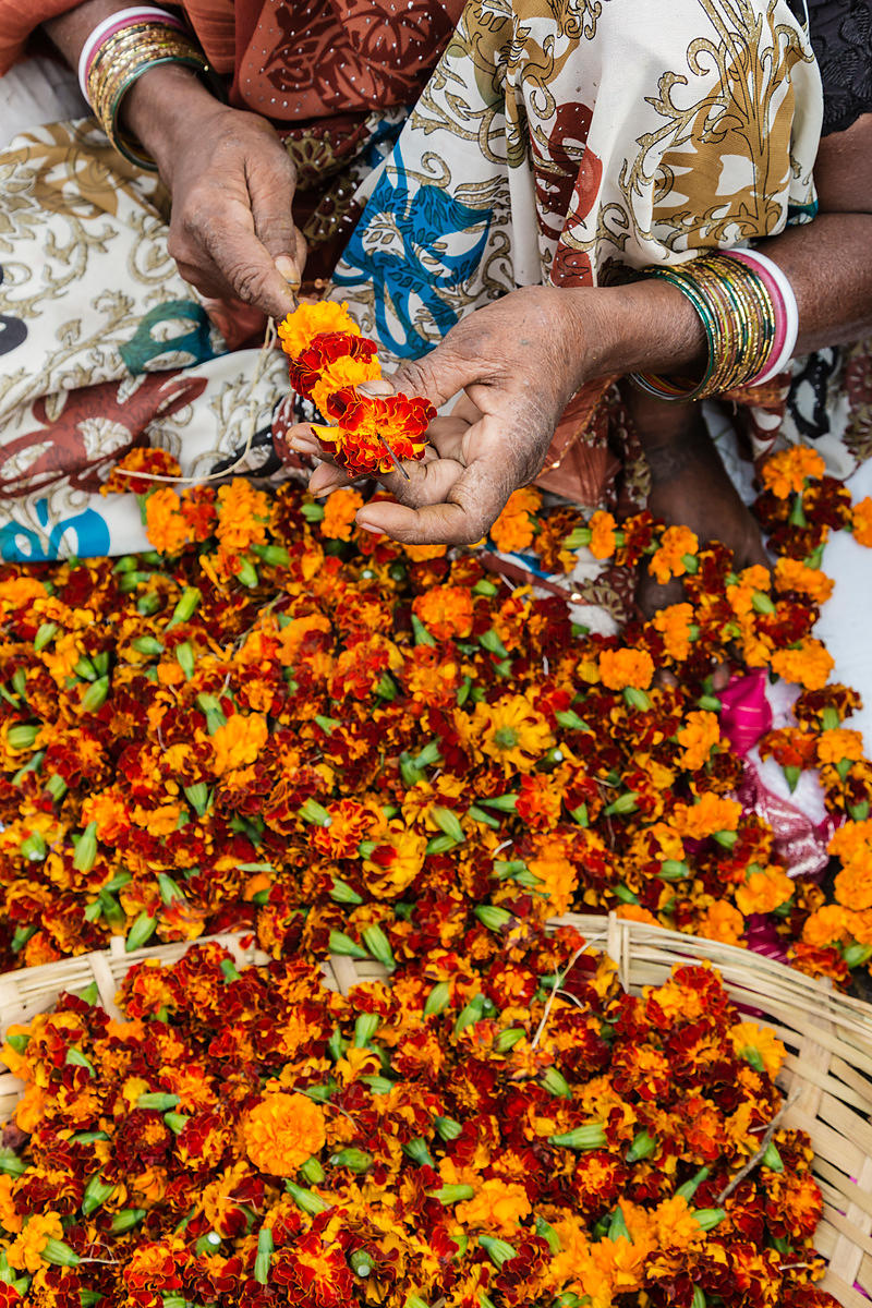 Woman Assembling Marigold Garlands