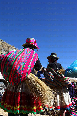 Woman arrive with qoya grass to make new ropes to rebuild the bridge , Q'eswachaka , Canas province , Peru