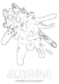 Amoeba Colouring-In