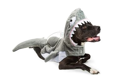 Dog Wearing Shark Halloween Costume