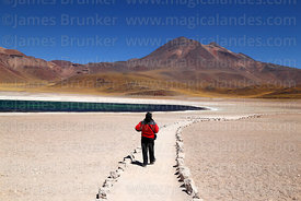Tourist walking on trail near Laguna Miscanti and Miñiques volcano, Los Flamencos National Reserve, Region II, Chile