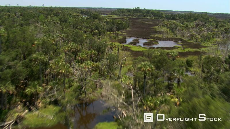 Flight over trees, water, and marshland in rural Florida