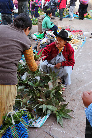 Quechua lady selling bromeliad plants used in traditional medicine in market, Cusco, Peru