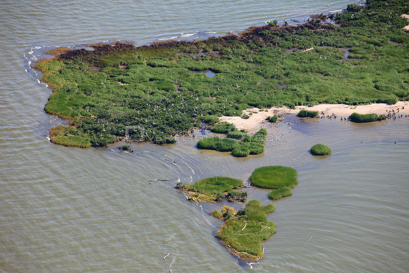 Aerial view of oiled bird nesting colonies in Barataria Bay area of the Mississippi River delta, contaminated by oil from the BP Deepwater Horizon leak in the Gulf of Mexico. Plaquemines Parish, Louisiana, USA, July 2010.