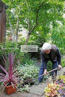 La phototh que les plus beaux jardins cordyline spp for Jardinier essonne