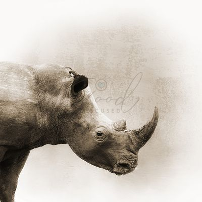 White Rhino Sepia Closeup Square