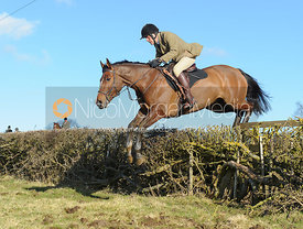 Charlie Smith jumping a hedge near Knossington Spinney - The Cottesmore at Furze Hill.