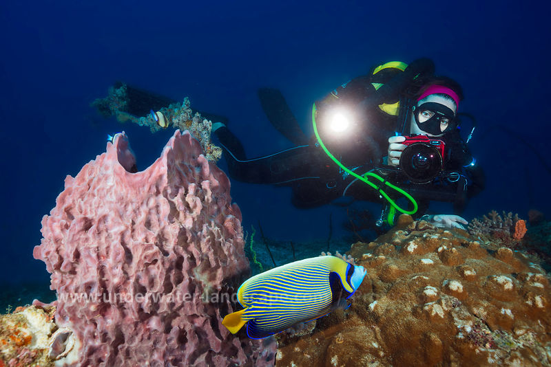 Underwater atmosphere - Underwater photographer