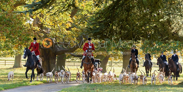 The Fitzwilliam hounds arriving at the meet - Fitzwilliam Opening Meet 2016