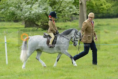 Class 18 - BSPS Heritage M&M (RIHS) Open Lead Rein photos