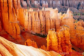 Hoodoos at sunrise, Bryce National Park, USA