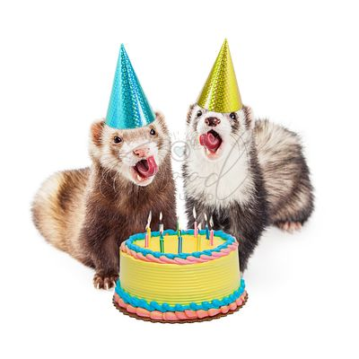 Ferret Birthday Party With Cake